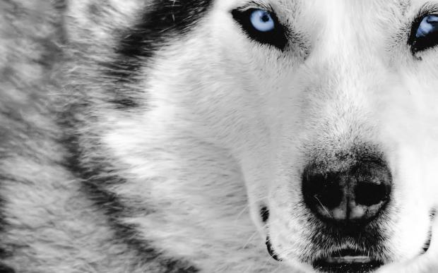 Mystic_Wolf_1440x900