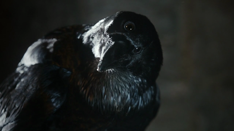 Three-eyed raven from the acclaimed series of George R.R. Martin. Click on the image to be taken to the websource.
