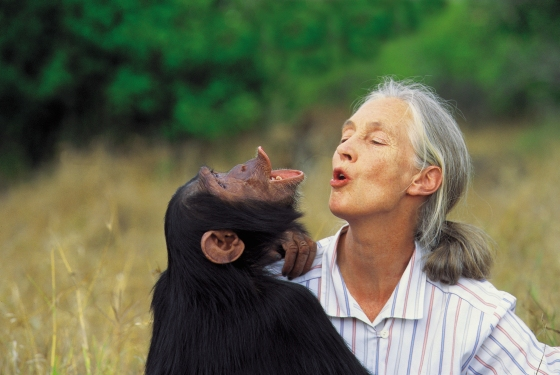 Dr. Jane Goodall with orphan chimpanzee Uruhara at the JGI Sweetwaters Sanctuary for orphan chimpanzees in Kenya. 1996. Click on the image to be taken to the websource.