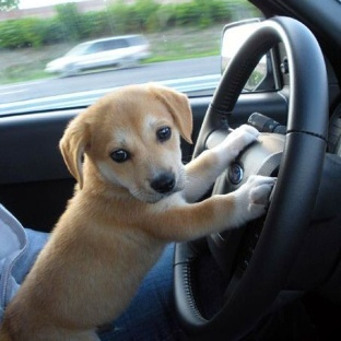 Driving-to-puppy-park-l