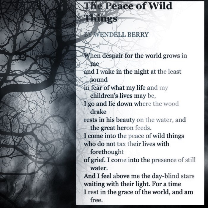 Took a photo of the poem as found on the internet and edited it using an iPhone app.