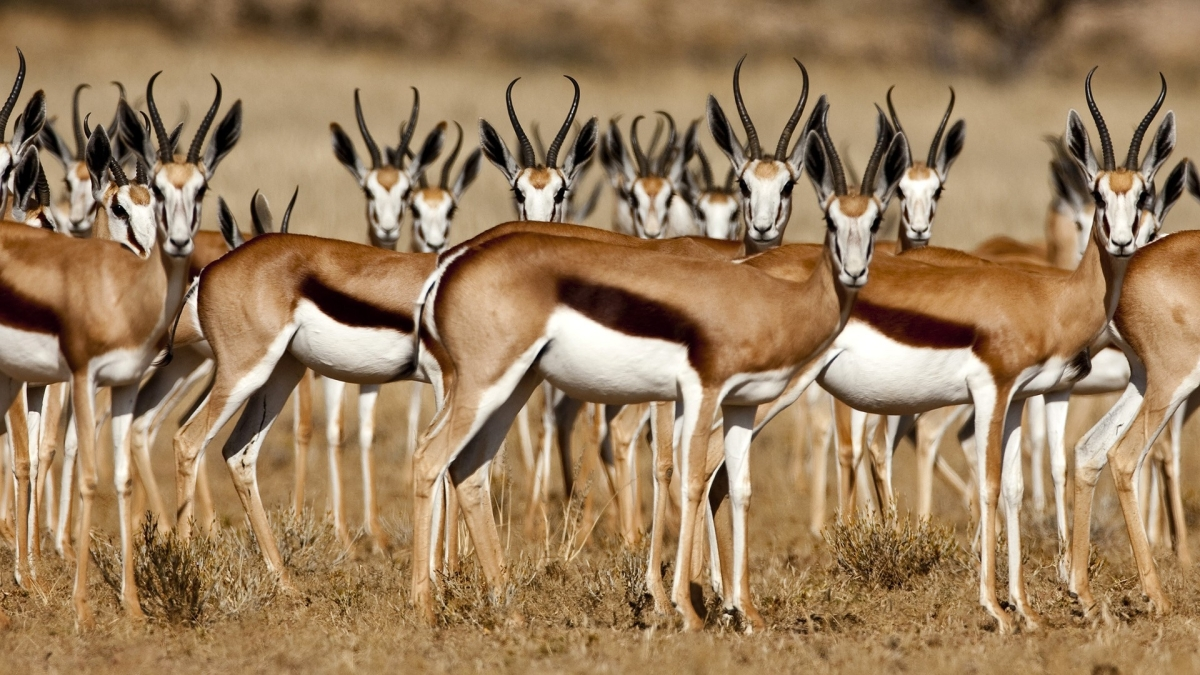 "[Poetry Friday] Two Poems by Naomi Shihab Nye From Her Collection, ""19  Varieties of Gazelle: Poems of the Middle East"" – Gathering Books"