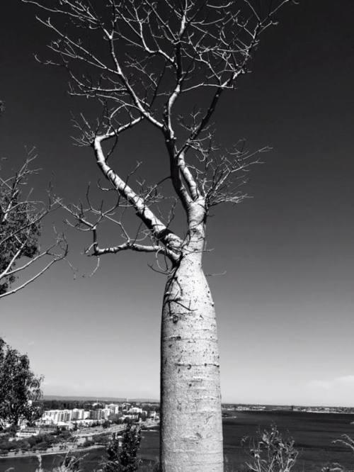 https://gatheringbooks.org/2015/10/27/photo-journal-kings-garden-in-perth-australia/