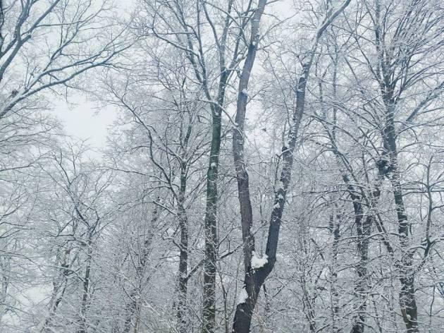 https://gatheringbooks.org/2016/02/23/photo-journal-ohio-winter-2016-part-1-of-2/