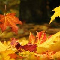 "[Poetry Friday] ""Falling Leaves"" by JaNay Brown-Wood"